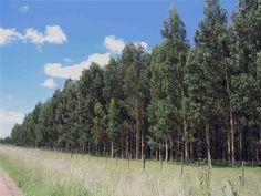 Forestación y parquización - Garden Sure, Jardines y Espacios Verdes