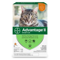 Pets Cat Fleas Flea Prevention For Cats Fleas