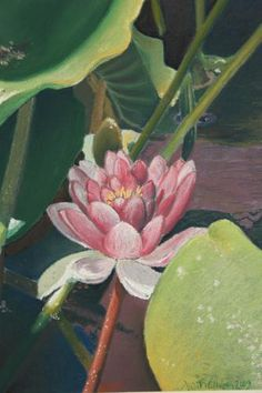 A chalk pastel of a water lily reaching for the sun. Part of the Garden Life Collection by Judith Cullivan.