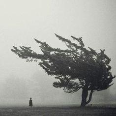Samotność powoli staje się rzeczywistością. Choć myślimy, że mamy przyjaciół tak naprawdę jesteśmy sami. To żałosne jak łatwo dajemy się zmylić. ~ Grace Cendyland