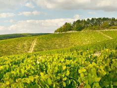 Visita a vinícola Chablisienne na Borgonha