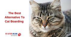 The Best Alternative To Cat Boarding In Dublin