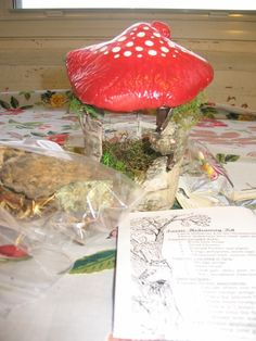 DIY fairy mushroom house