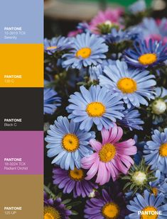 Pantone Black, Palette, Color, Colour, Pallets, Colors
