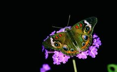 Wimberley author studied plant preferences and beautifully photographed adults and caterpillars to produce much more than a field guide.