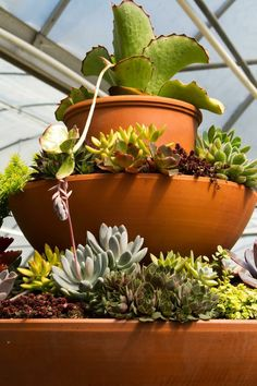 Container Gardening At The Family Tree! #gardening #plants