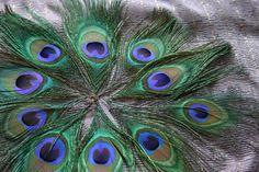 Embellish me Peacock  Peacock Feather Eyes 20 by MadamePaisleys, $23.18