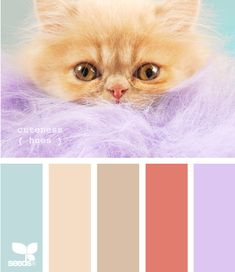 Colour inspiration and ideas for home decorating, art, craft and design.  #shadesofanimalpaintcolours