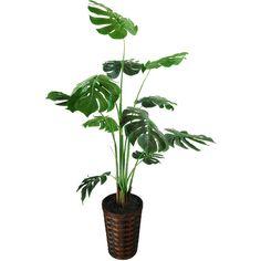 Spanish Moss Split Leaf Philodendron Floor Plant in Basket ❤ liked on Polyvore featuring home, home decor, floral decor, colored baskets, leaf home decor and leaf basket