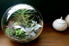 Desert Plant Terrarium - i actually found a new store in Denver that has desert Terrariums .... they are gorgeous!  I hadn't even thought about the fact that Denver has a desert climate!  I may have to switch up the game plan and go desert style.
