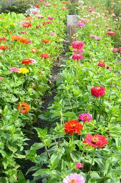 #Flowers # Holland