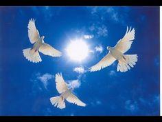 pigeon flying video