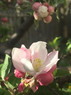 Hello.. from my garden- Tyra. D