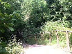 outdoor clinic Sydenham Hill Woods
