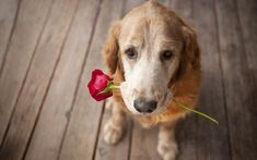 6 Signs Your Dog Loves You     #CoffeePuppy http://snip.ly/a8m1v