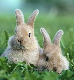 Bunny twins in the garden