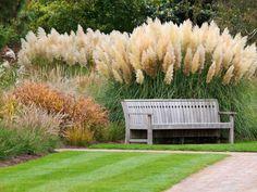 Картинки по запросу trawy ozdobne w ogrodzie kompozycje