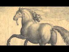 Video: Horses of the Renaissance