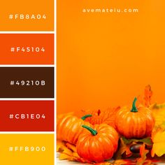 Front view pumpkins with orange background Color Palette #307 - Ave Mateiu