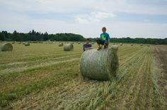 The boys in a recently baled hay field