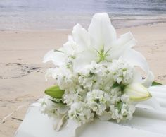 Casablanca Lily and seasonal flowers. Flora Botanica, Flower Company, Pink Weddings, Seasonal Flowers, Florists, Casablanca, Lilies, Bouquets, Sydney