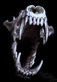 Výsledek obrázku pro wolf skull mouth open