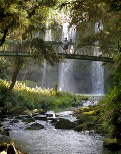 Whangarei Falls, Northland, New Zealand The Beautiful Country, Beautiful Places, Beautiful Beautiful, Places To Travel, Places To See, Places Around The World, Around The Worlds, North Island New Zealand, New Zealand Holidays