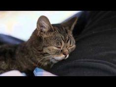Snoring #Cat - #funny #cute