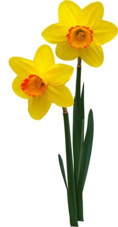 Fleur ( printannière ) etc