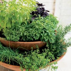 Home-grown herb container garden - Cool Container Gardens - Sunset