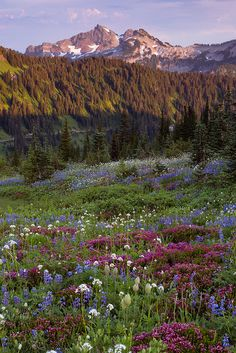 Mt. Rainier National Park, Washington State