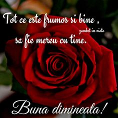 Pentru cel mai frumos suflet ... Red Roses, Good Morning, Love Quotes, Messages, Motivation, Day, Floral, Youtube, Pictures
