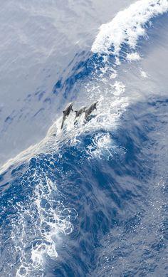 Delfines, delfines, delfines!!!