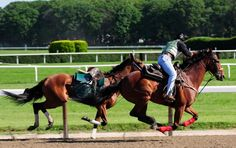 May 31, 2012: Outriders attempt to slow down an out-of-control horse on main track at Belmont Park, narrowly averting a collision with Triple Crown contender I'll Have Another.