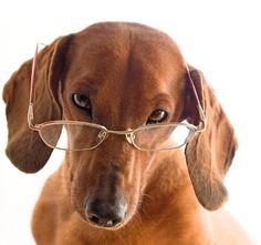 You can't be serious. #NorthendOptical #Animals #Eyewear