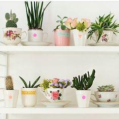 Pra quem não tem espaço pra #plantinhas ou #hortinha, mas não abre mão! Muito delicado e fofo! 💗🌿🌵💐