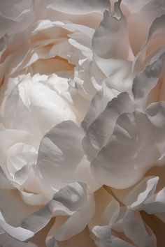 Super Ideas For Flowers Photography Peonies Texture Flower Backgrounds, Wallpaper Backgrounds, Iphone Wallpapers, Drawing Wallpaper, Iphone Backgrounds, Wallpaper Pictures, Nature Wallpaper, White Flowers, Beautiful Flowers