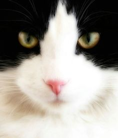 My best friend......the cat!!   yes, yes and amen !!  :)