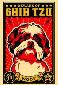 Obey the Shih Tzu!  Woof!