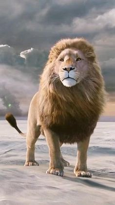 Lion Images, Lion Pictures, Majestic Animals, Animals Beautiful, Beautiful Lion, Lion King Video, Cute Baby Animals, Funny Animals, Lion Live Wallpaper