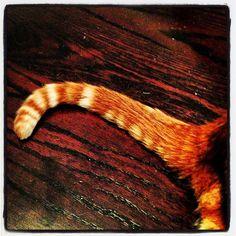 Orange Cat Tail ~ IMG_2899 by neginn, via Flickr