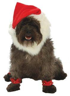 Go Dog Christmas Santa Dog Costume - Medium -- Check this awesome image  : Costumes for dog