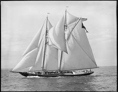 Gertrude L. Thebaud 1907
