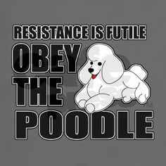 No one can resist the persistent enchanting Poodle who wants to play with you!