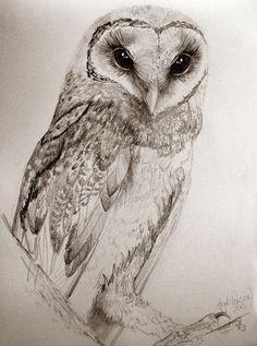 Graphite Drawings - owl