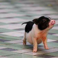Hey pig... Now I wanna watch babe