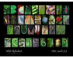 ABC and 123 by wildalphabet on Etsy, $30.00