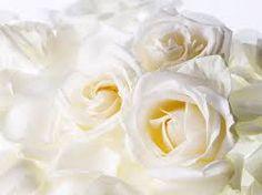 flowers white - Google zoeken