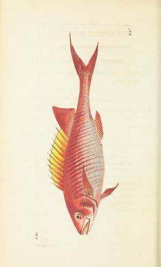 v.14 - The naturalist's miscellany, or Coloured figures of natural objects - Biodiversity Heritage Library