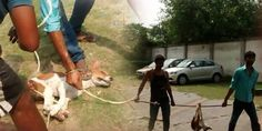 Demand punishment for the people involved in culling 16 stray dogs in Diamond City West, Kolkata, IN
